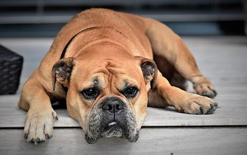 Hundehalterhaftpflichtversicherung